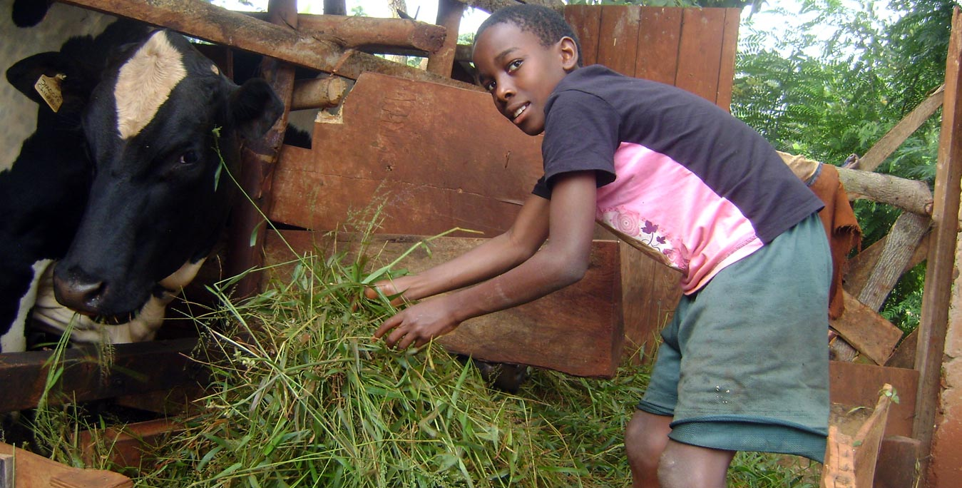 Child participation in animal husbandry